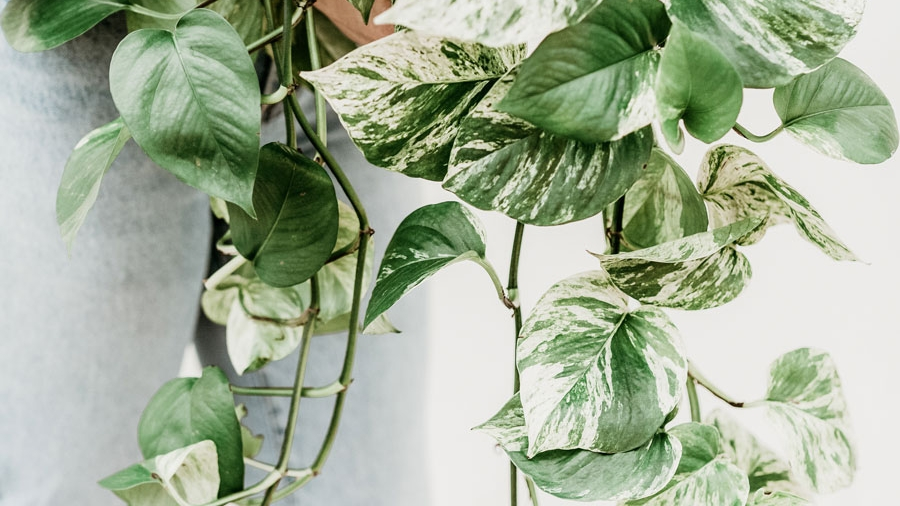 2020 House Plant Trends and Tips